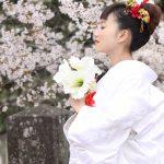 和装花嫁白無垢桜