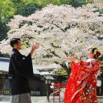 群馬県和婚神前式桜結婚式