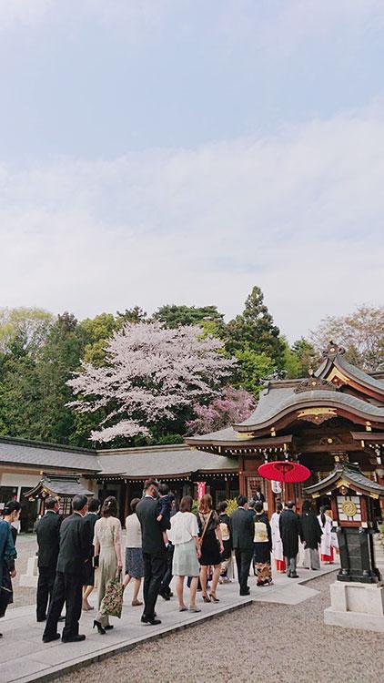 群馬県進雄神社桜結婚式